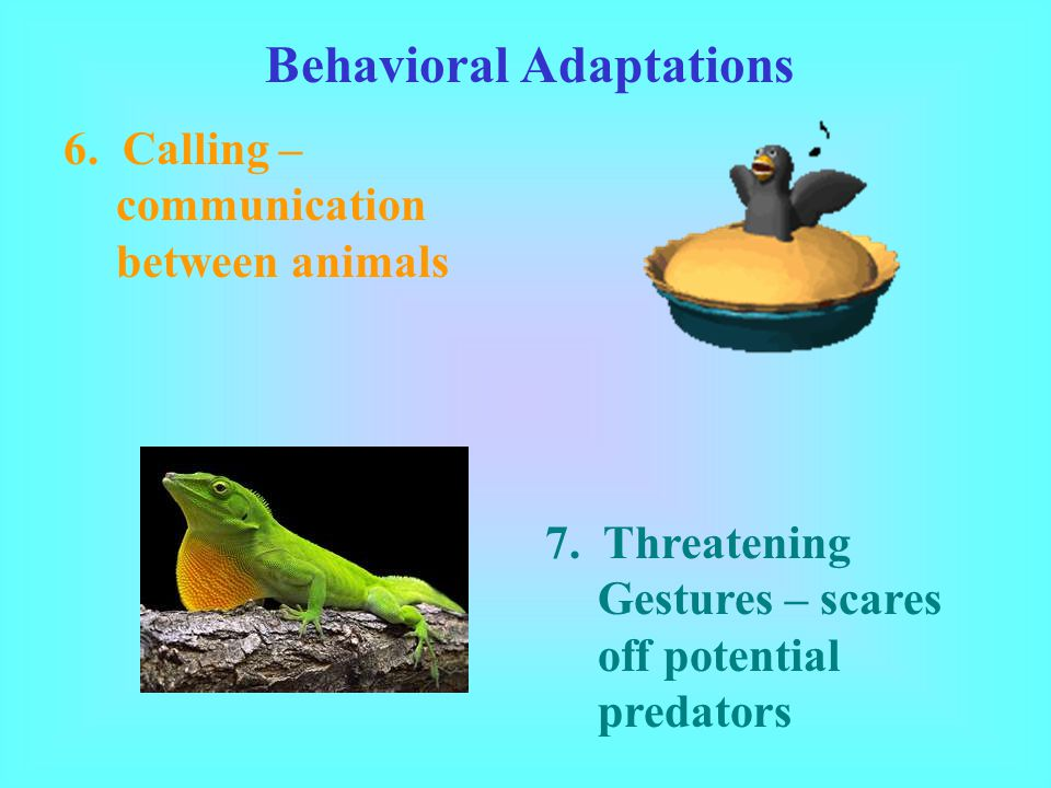 Behavioral Adaptations 6.Calling – communication between animals 7.