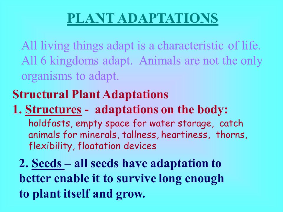 PLANT ADAPTATIONS All living things adapt is a characteristic of life.