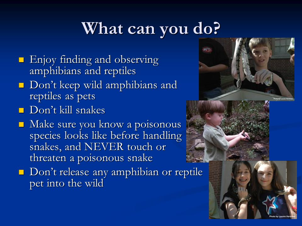 What can you do? Enjoy finding and observing amphibians and reptiles Enjoy finding and observing amphibians and reptiles Don't keep wild amphibians an