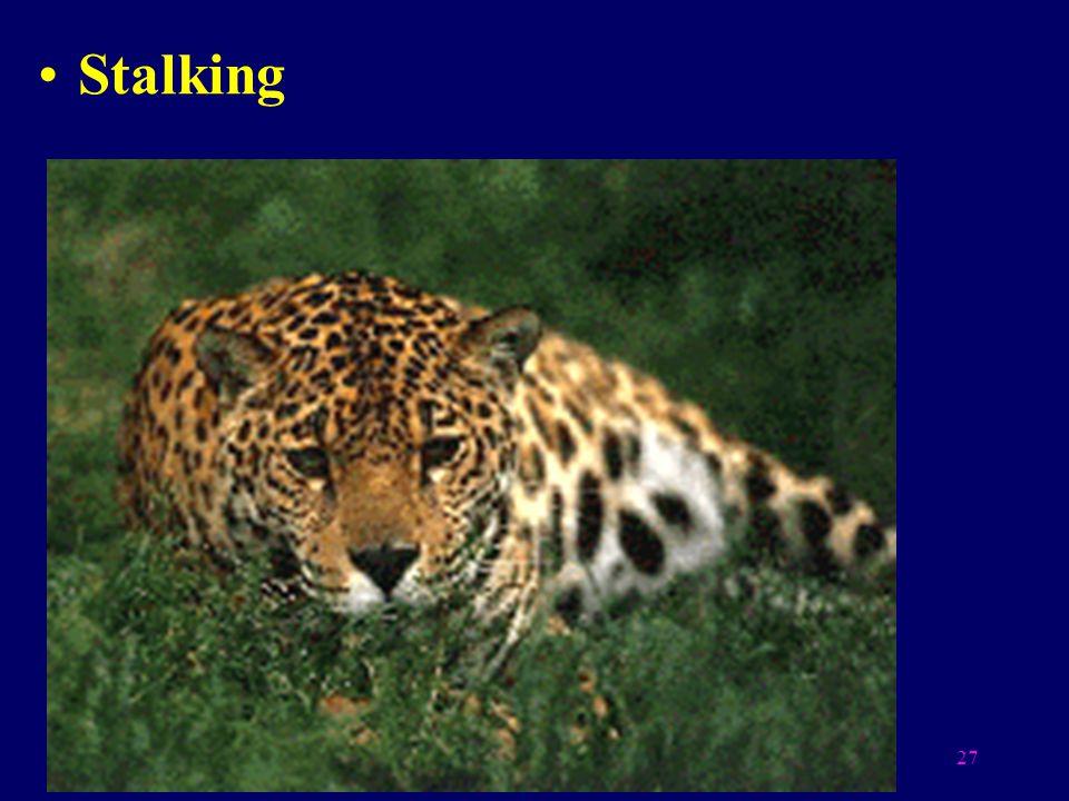 27 Stalking