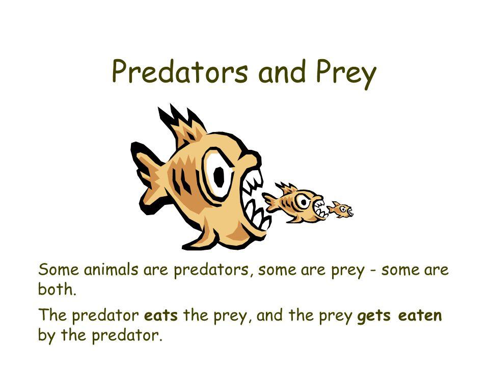 Predators and Prey Some animals are predators, some are prey - some are both. The predator eats the prey, and the prey gets eaten by the predator.