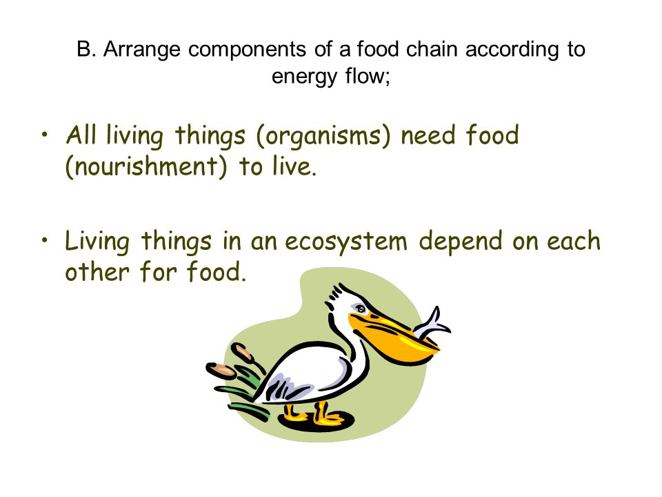 B. Arrange components of a food chain according to energy flow; All living things (organisms) need food (nourishment) to live. Living things in an eco