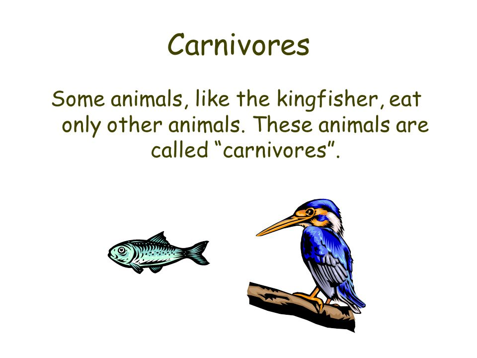 Herbivores Some animals do not eat other animals.
