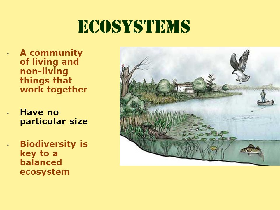 Biodiversity: the greater the biodiversity of the living organisms, the healthier the ecosystem Healthy Ecosystems Carrying Capacity & limiting factors: Balance is the key to healthy ecosystems Components of a healthy ecosystem include: · sunlight (energy source) · living organisms (producers, consumers, decomposers ; predator/prey) · nonliving things (land forms, water sources, soil, rocks) · dead organisms · natural boundaries (set by the living and nonliving things within the area)