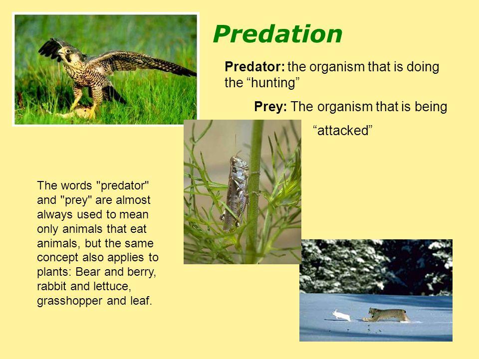 Predation The words