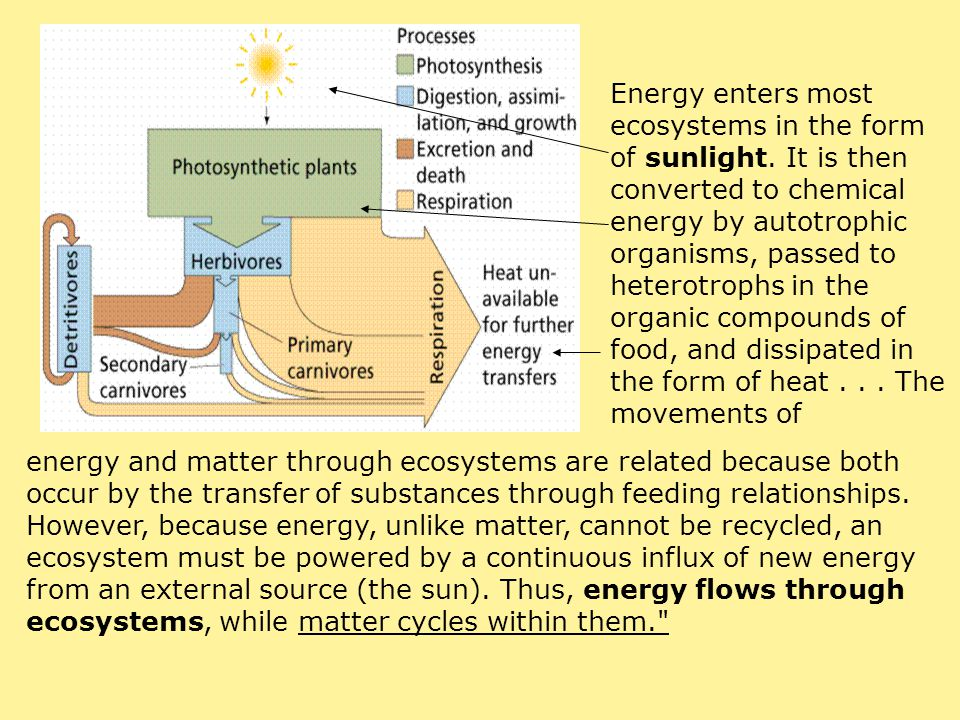 Energy enters most ecosystems in the form of sunlight. It is then converted to chemical energy by autotrophic organisms, passed to heterotrophs in the