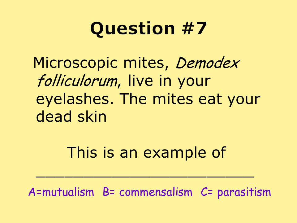 Microscopic mites, Demodex folliculorum, live in your eyelashes. The mites eat your dead skin This is an example of _______________________ A=mutualis