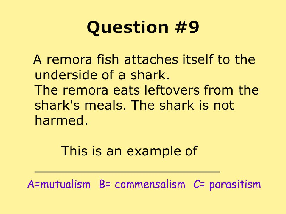 A remora fish attaches itself to the underside of a shark. The remora eats leftovers from the shark's meals. The shark is not harmed. This is an examp
