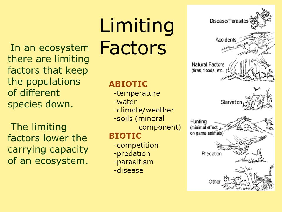 Limiting Factors In an ecosystem there are limiting factors that keep the populations of different species down. The limiting factors lower the carryi
