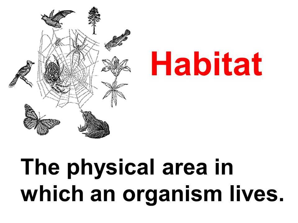 Habitat The physical area in which an organism lives.