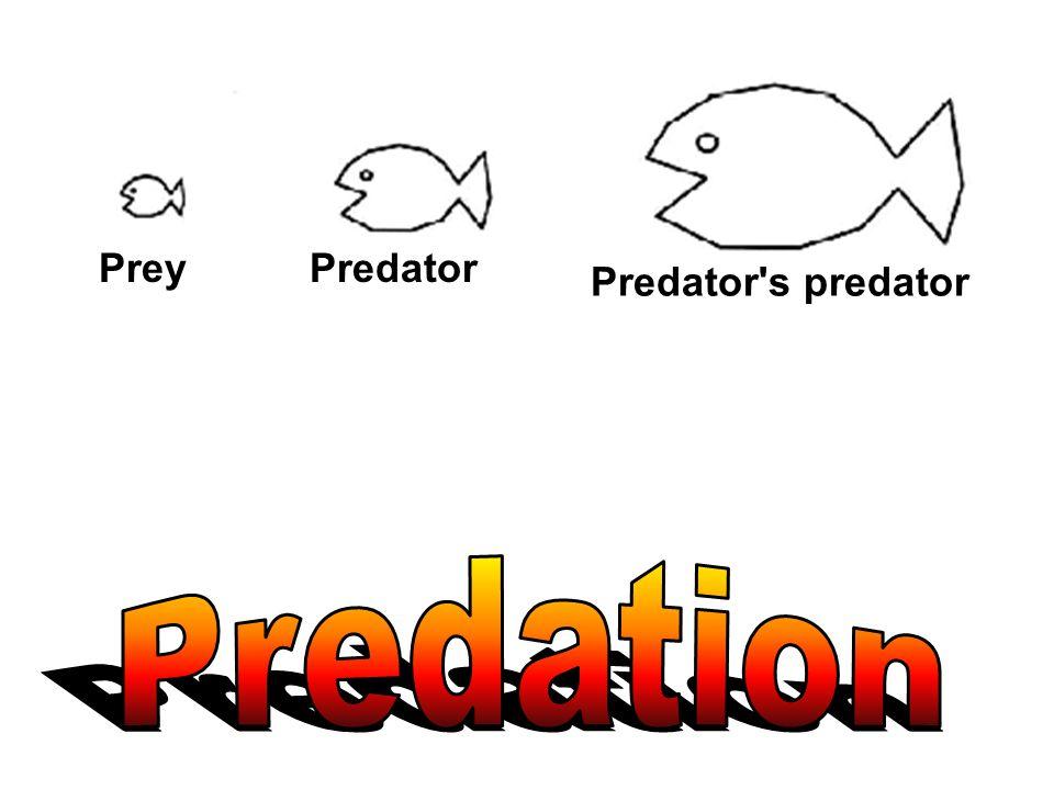 PreyPredator Predator's predator
