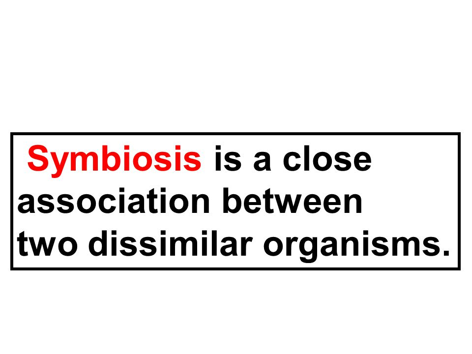 Symbiosis is a close association between two dissimilar organisms.