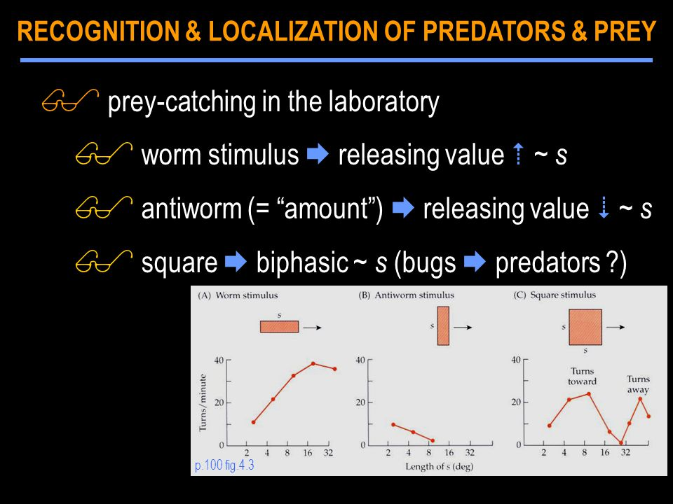 $ prey-catching in the laboratory $ worm stimulus  releasing value  ~ s $ antiworm (= amount )  releasing value  ~ s $ square  biphasic ~ s (bugs  predators ?) p.100 fig.4.3 RECOGNITION & LOCALIZATION OF PREDATORS & PREY