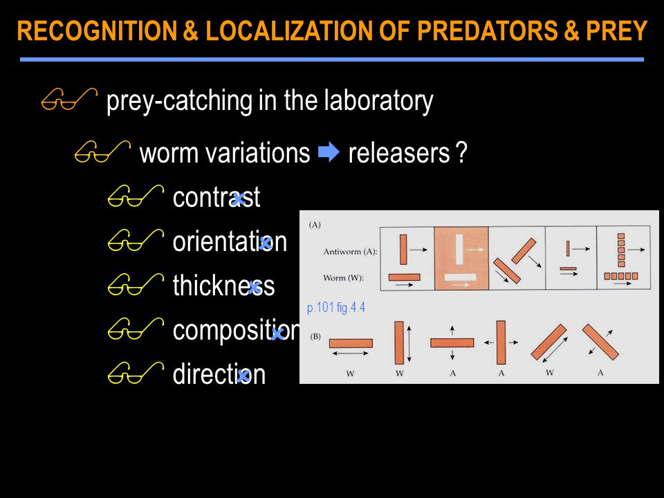 $ prey-catching in the laboratory $ worm variations  releasers ? $ contrast $ orientation $ thickness $ composition $ direction p.101 fig.4.4    