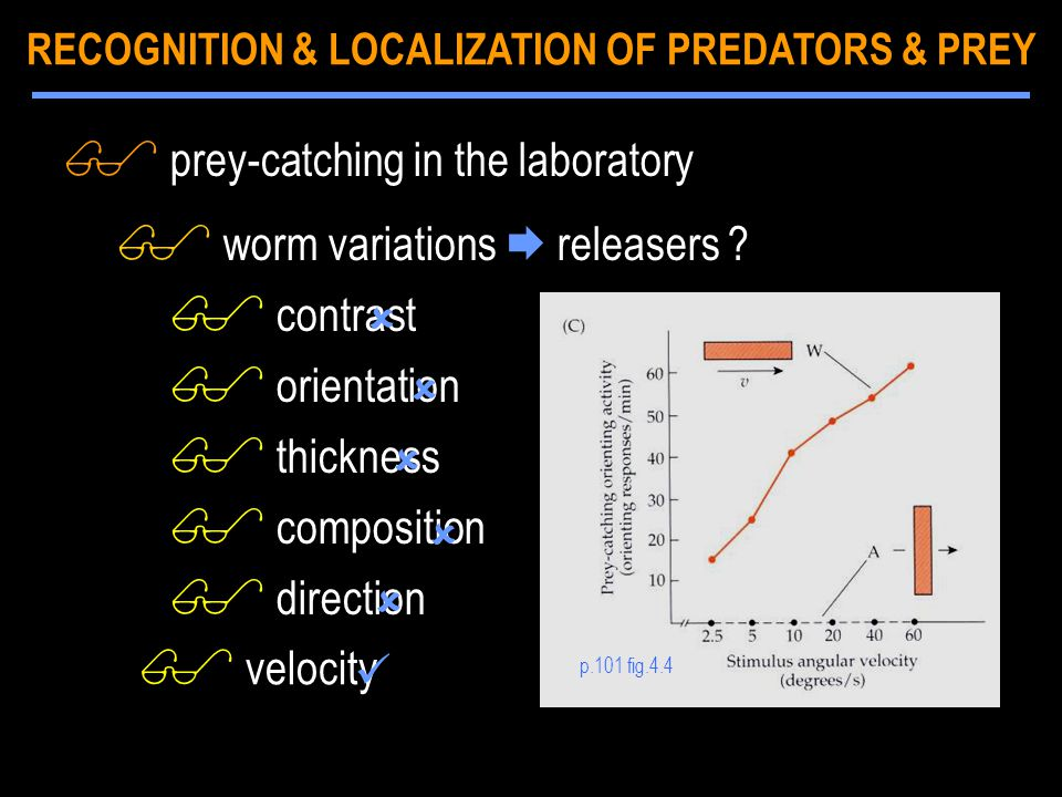 p.101 fig.4.4 $ prey-catching in the laboratory $ worm variations  releasers ? $ contrast $ orientation $ thickness $ composition $ direction    