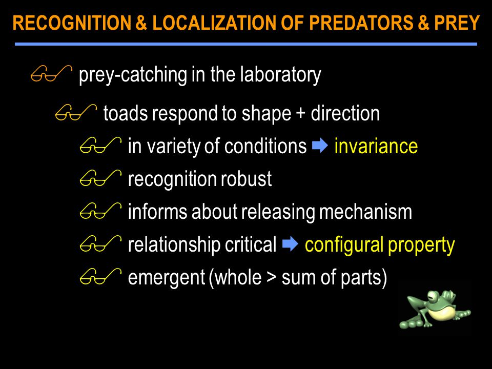 $ prey-catching in the laboratory $ toads respond to shape + direction $ in variety of conditions  invariance $ recognition robust $ informs about re