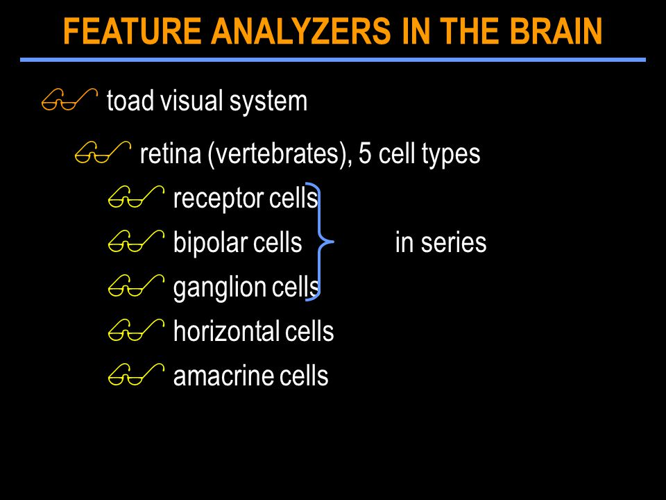 $ toad visual system $ retina (vertebrates), 5 cell types $ receptor cells $ bipolar cells in series $ ganglion cells $ horizontal cells $ amacrine ce
