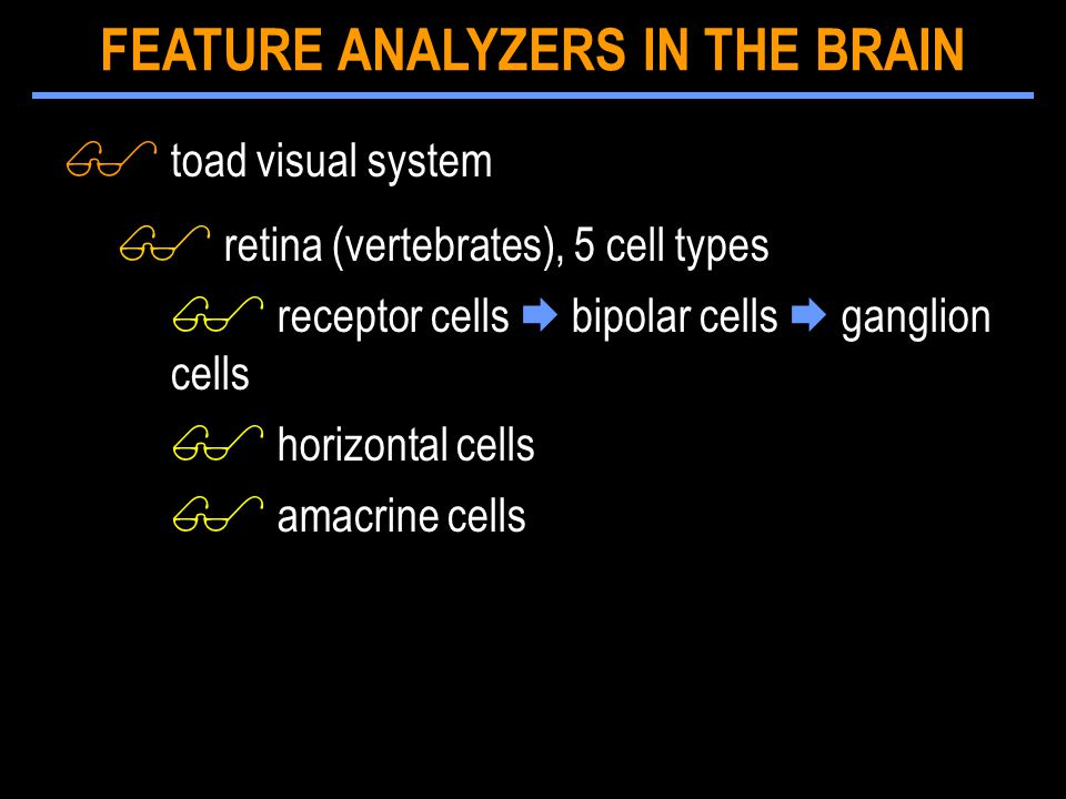 $ toad visual system $ retina (vertebrates), 5 cell types $ receptor cells  bipolar cells  ganglion cells $ horizontal cells $ amacrine cells FEATURE ANALYZERS IN THE BRAIN
