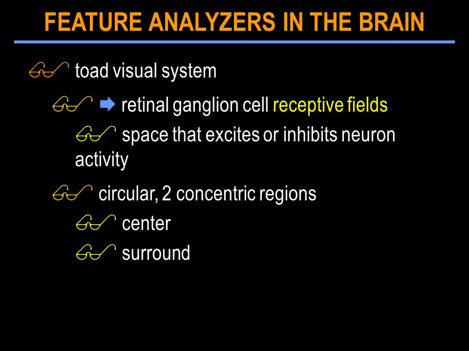 $ toad visual system $  retinal ganglion cell receptive fields $ space that excites or inhibits neuron activity $ circular, 2 concentric regions $ center $ surround FEATURE ANALYZERS IN THE BRAIN