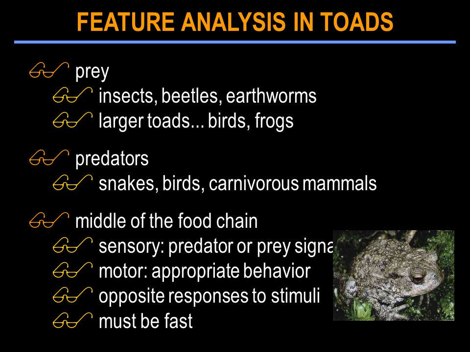 $ prey $ insects, beetles, earthworms $ larger toads... birds, frogs $ predators $ snakes, birds, carnivorous mammals $ middle of the food chain $ sen