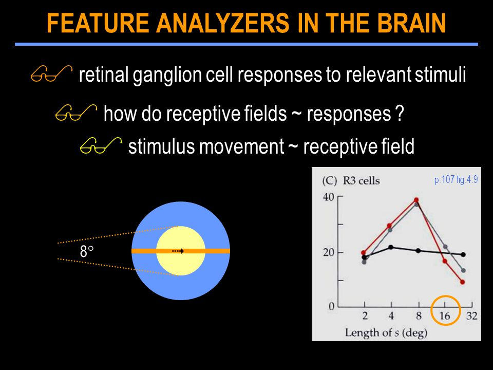 $ retinal ganglion cell responses to relevant stimuli $ how do receptive fields ~ responses .