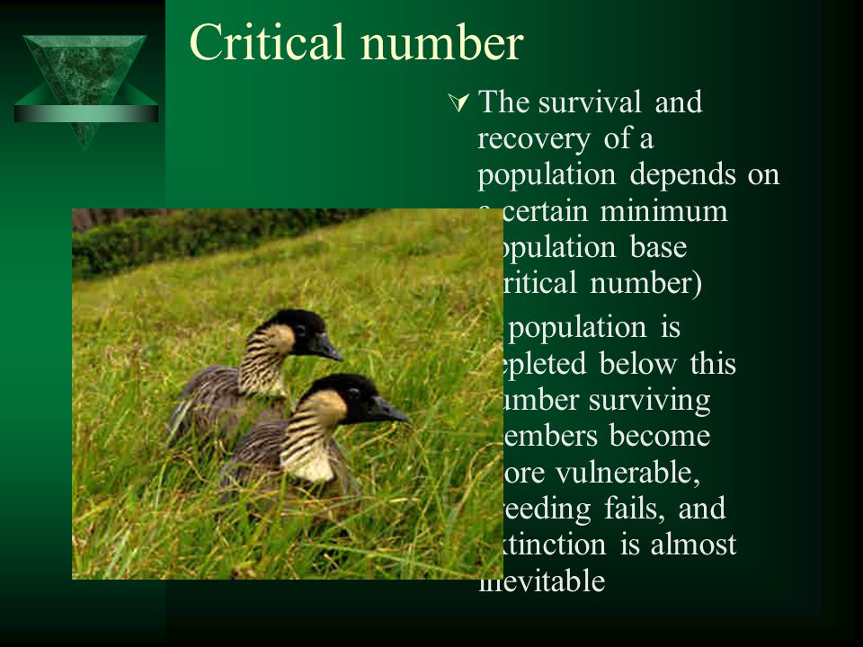 Critical number  The survival and recovery of a population depends on a certain minimum population base (critical number)  If population is depleted below this number surviving members become more vulnerable, breeding fails, and extinction is almost inevitable