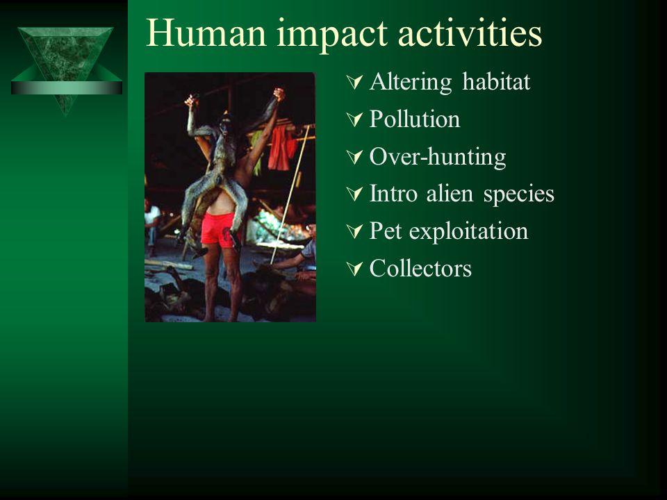 Human impact activities  Altering habitat  Pollution  Over-hunting  Intro alien species  Pet exploitation  Collectors