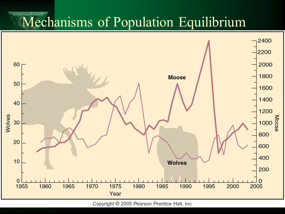 Mechanisms of Population Equilibrium  Predator – Prey –A rise in the moose population –Rise in the wolf population –Higher predation –Lower moose population –Lag time from year to year