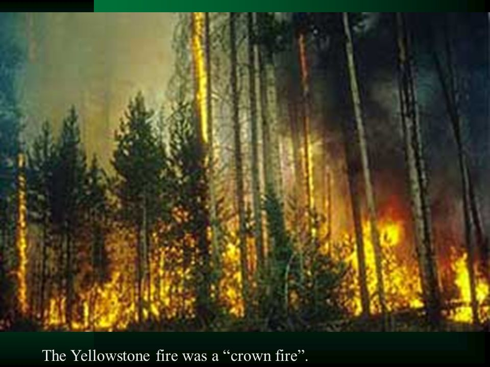 The Yellowstone fire was a crown fire .