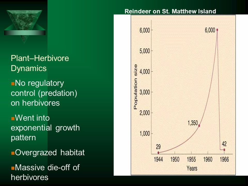 Plant–Herbivore Dynamics No regulatory control (predation) on herbivores Went into exponential growth pattern Overgrazed habitat Massive die-off of herbivores Reindeer on St.