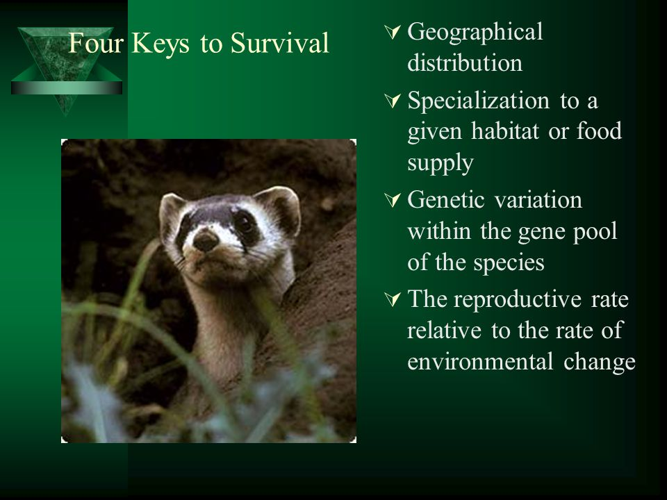 Four Keys to Survival  Geographical distribution  Specialization to a given habitat or food supply  Genetic variation within the gene pool of the s