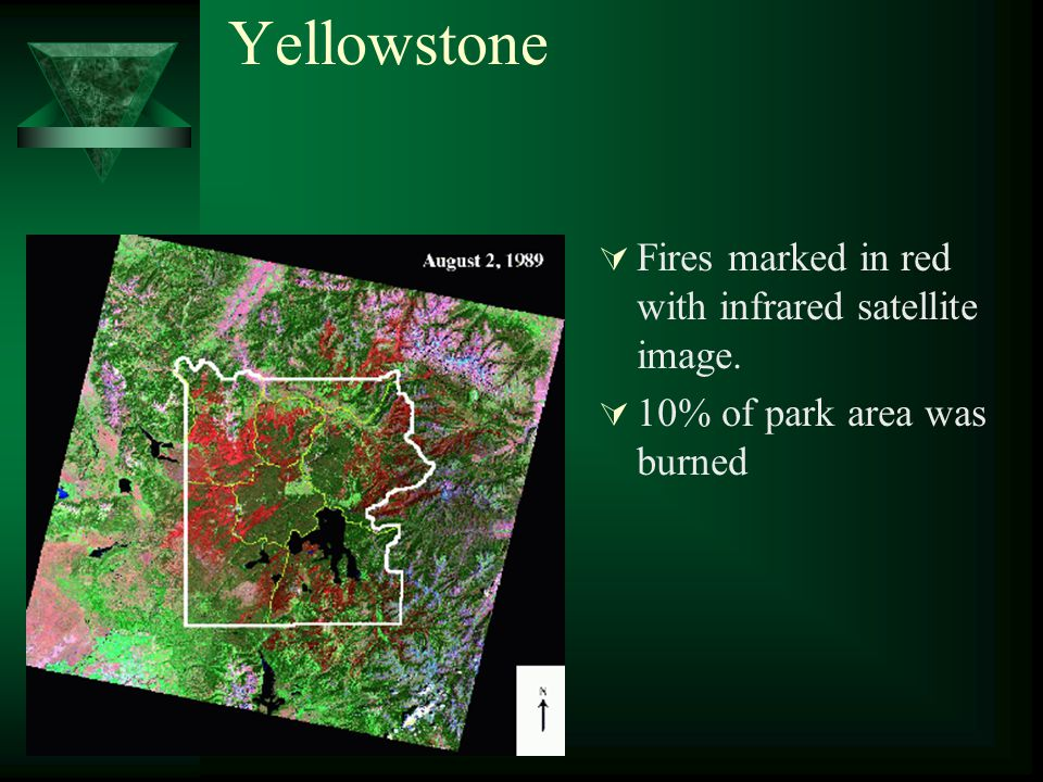 Yellowstone  Fires marked in red with infrared satellite image.  10% of park area was burned