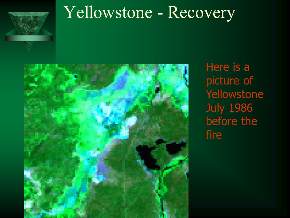 Yellowstone - Recovery Here is a picture of Yellowstone July 1986 before the fire