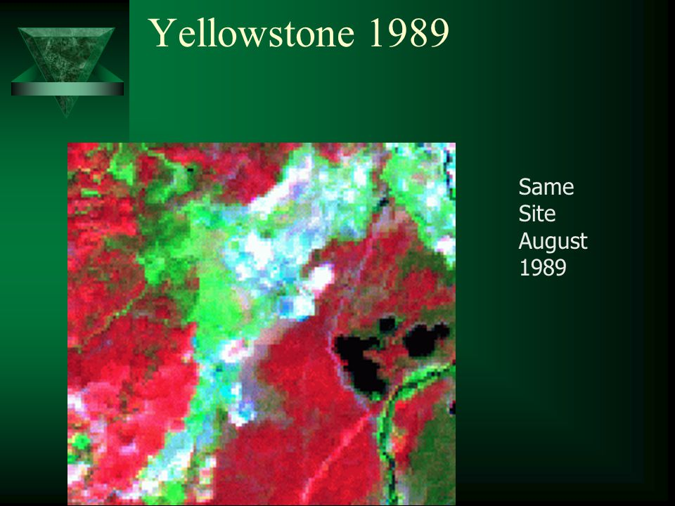 Yellowstone 1989 Same Site August 1989