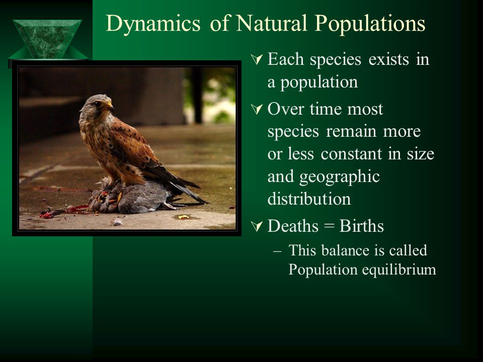 Dynamics of Natural Populations  Each species exists in a population  Over time most species remain more or less constant in size and geographic dis