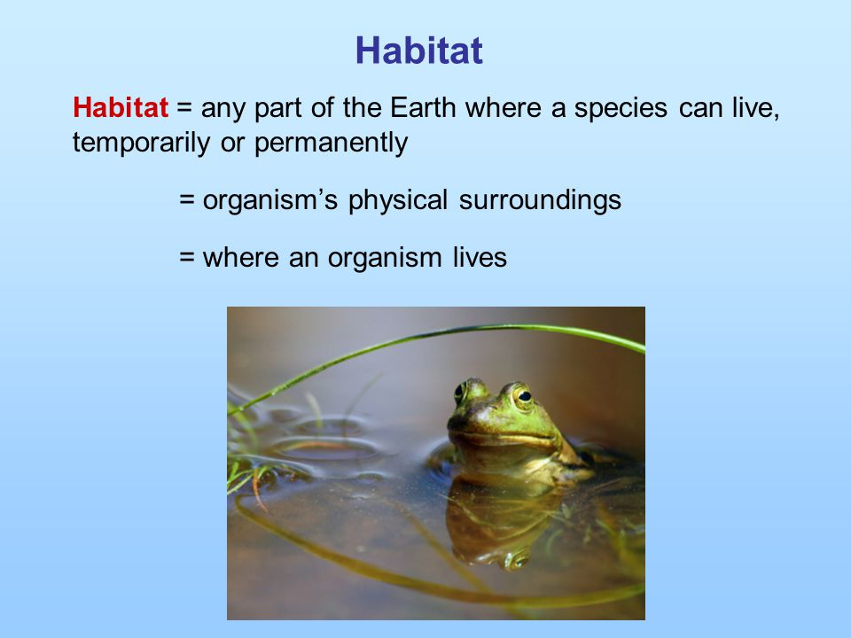 Habitat Habitat = any part of the Earth where a species can live, temporarily or permanently = organism's physical surroundings = where an organism li