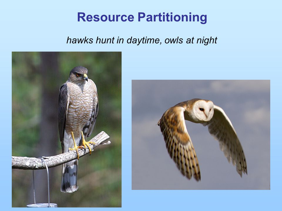 Resource Partitioning hawks hunt in daytime, owls at night