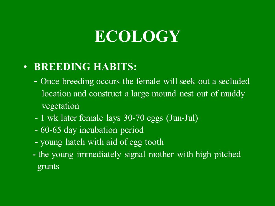 ECOLOGY BREEDING HABITS: - Once breeding occurs the female will seek out a secluded location and construct a large mound nest out of muddy vegetation
