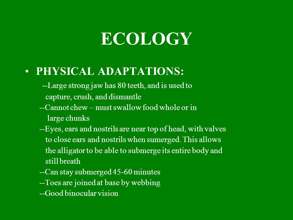 ECOLOGY PHYSICAL ADAPTATIONS: --Large strong jaw has 80 teeth, and is used to capture, crush, and dismantle --Cannot chew – must swallow food whole or in large chunks --Eyes, ears and nostrils are near top of head, with valves to close ears and nostrils when sumerged.