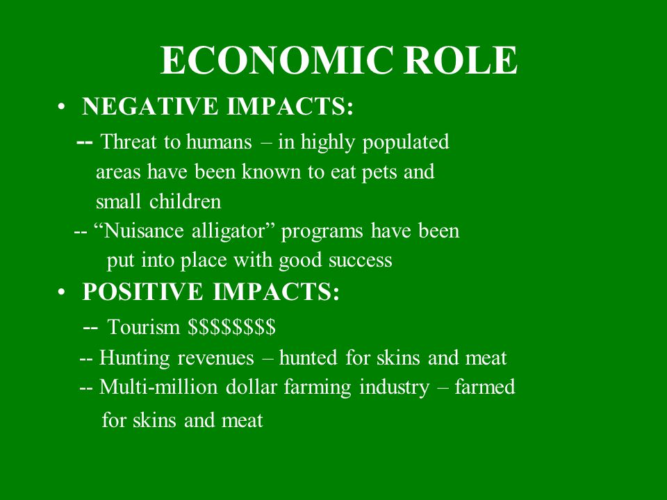 ECONOMIC ROLE NEGATIVE IMPACTS: -- Threat to humans – in highly populated areas have been known to eat pets and small children -- Nuisance alligator programs have been put into place with good success POSITIVE IMPACTS: -- Tourism $$$$$$$$ -- Hunting revenues – hunted for skins and meat -- Multi-million dollar farming industry – farmed for skins and meat