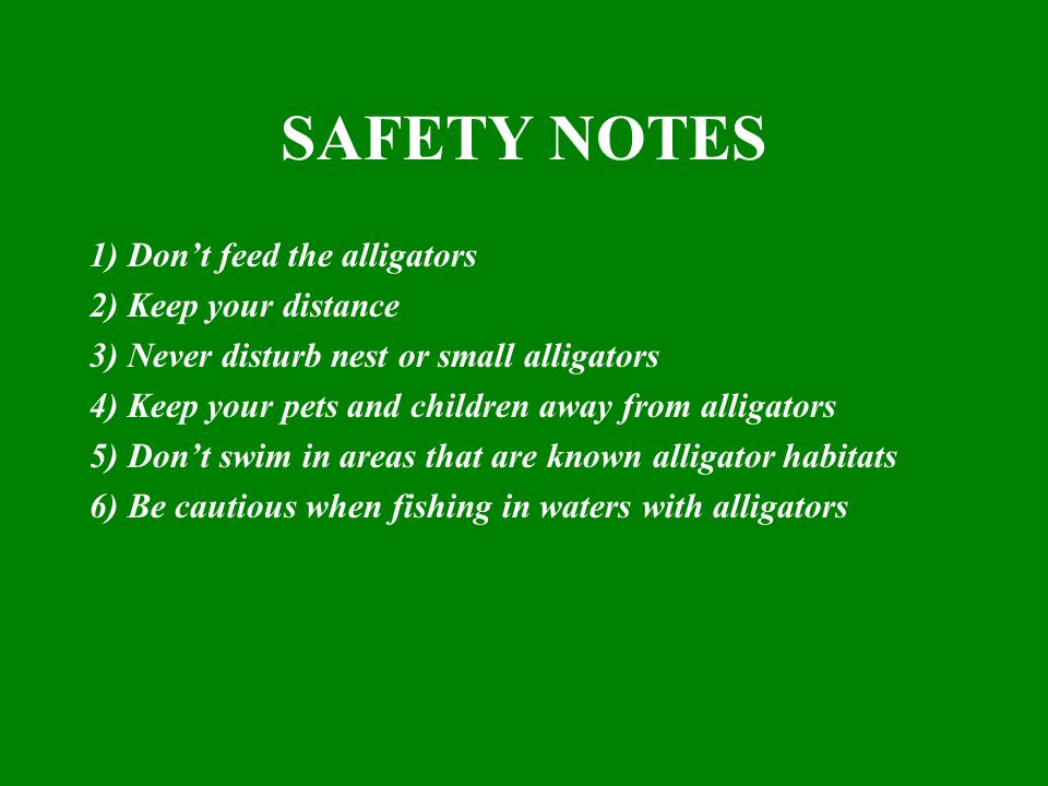 SAFETY NOTES 1) Don't feed the alligators 2) Keep your distance 3) Never disturb nest or small alligators 4) Keep your pets and children away from alligators 5) Don't swim in areas that are known alligator habitats 6) Be cautious when fishing in waters with alligators