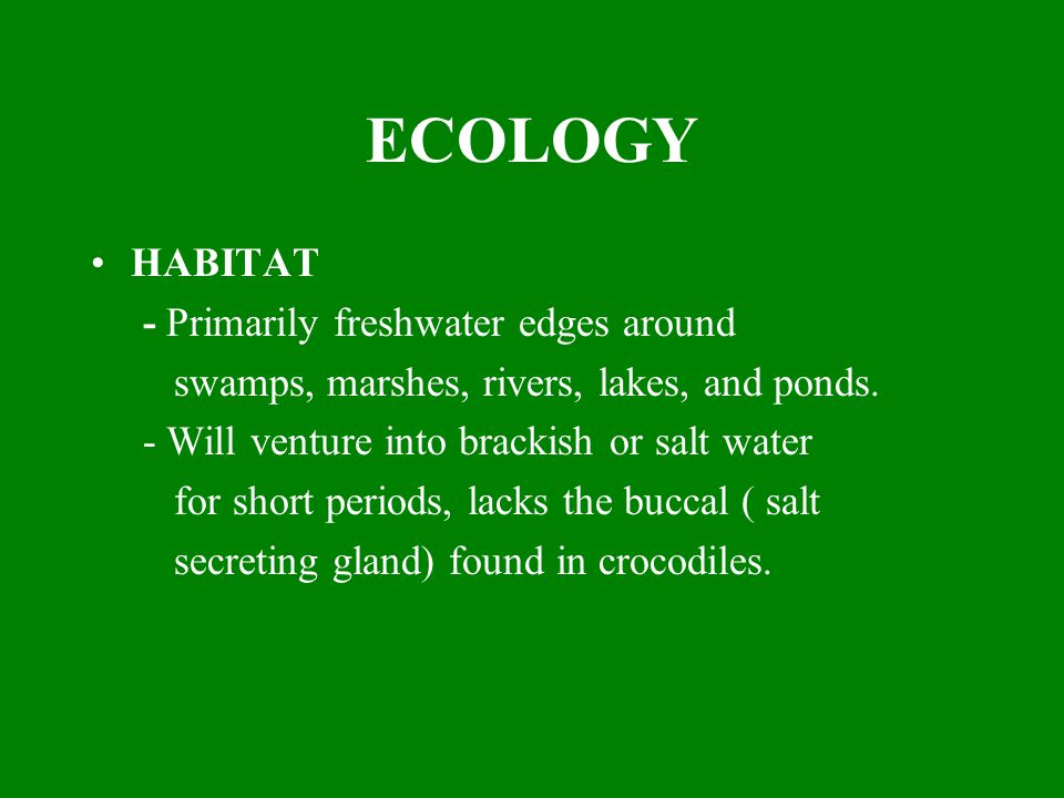 ECOLOGY HABITAT - Primarily freshwater edges around swamps, marshes, rivers, lakes, and ponds. - Will venture into brackish or salt water for short pe
