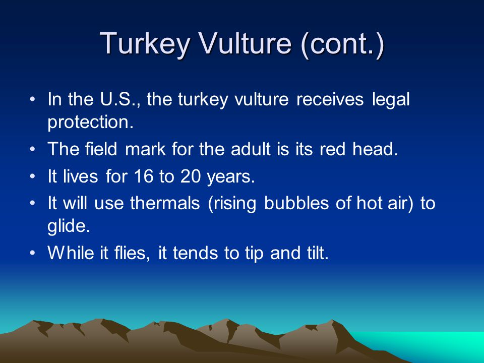 Turkey Vulture (cont.) In the U.S., the turkey vulture receives legal protection.