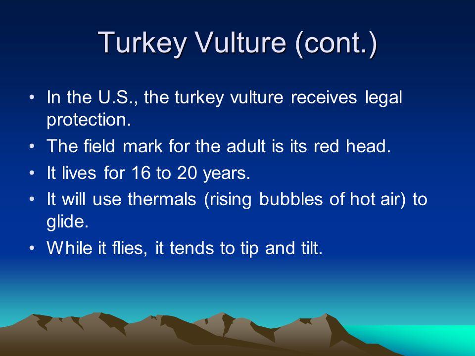 Resources (linked) http://en.wikipedia.org/wiki/Vulture http://en.wikipedia.org/wiki/Turkey_Vulture http://en.wikipedia.org/wiki/Accipitridae http://en.wikipedia.org/wiki/Old_World_vulture http://en.wikipedia.org/wiki/New_World_vulture http://www.peregrinefund.org/Explore_Raptors/vultures/t urkevul.htmlhttp://www.peregrinefund.org/Explore_Raptors/vultures/t urkevul.html http://identify.whatbird.com/obj/117/overview/Turkey_Vul ture.aspxhttp://identify.whatbird.com/obj/117/overview/Turkey_Vul ture.aspx