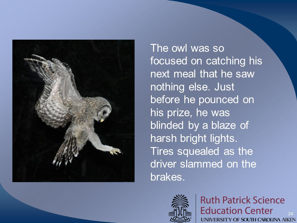 24 The owl was so focused on catching his next meal that he saw nothing else. Just before he pounced on his prize, he was blinded by a blaze of harsh