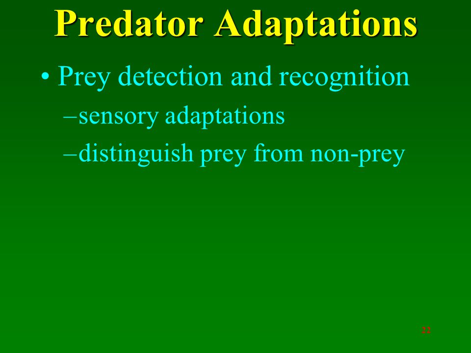 22 Predator Adaptations Prey detection and recognition –sensory adaptations –distinguish prey from non-prey