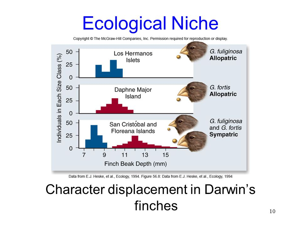 10 Ecological Niche Character displacement in Darwin's finches