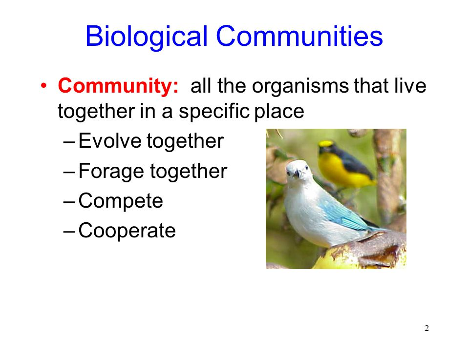 2 Biological Communities Community: all the organisms that live together in a specific place –Evolve together –Forage together –Compete –Cooperate