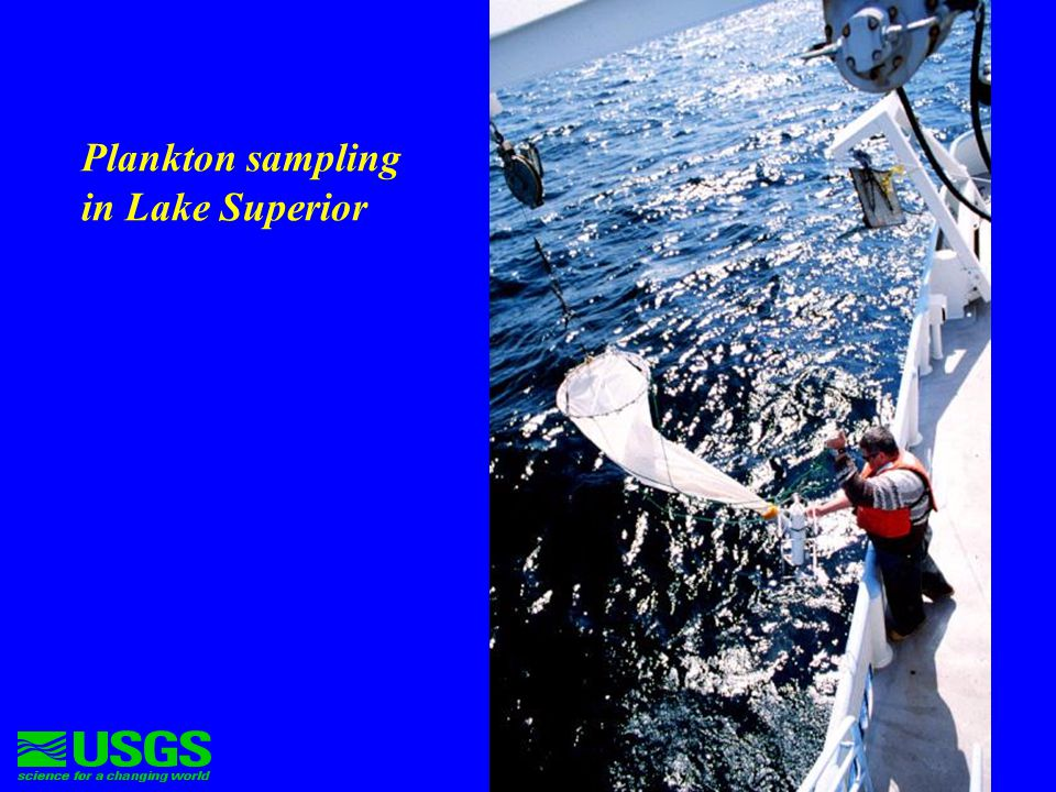 Dominant zooplankton species in Lake Superior spring samples Calanoid copepods –Limnocalanus macrurus –Diaptomus sicilis Cyclopoid copepods –Diacyclops thomasi Other copepods and cladocerans are rare at this time of year.