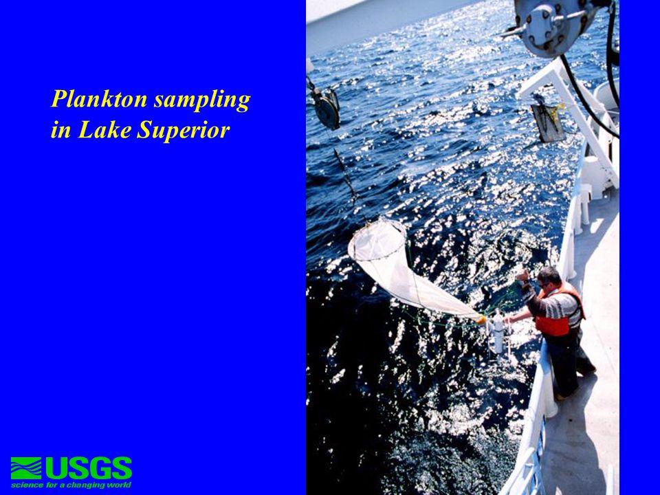Prey fish-zooplankton interaction